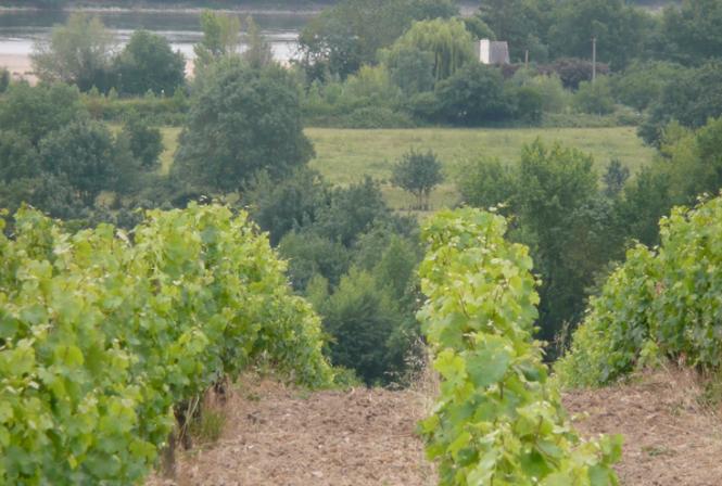 Le GiESCO se penche sur la viticulture durable