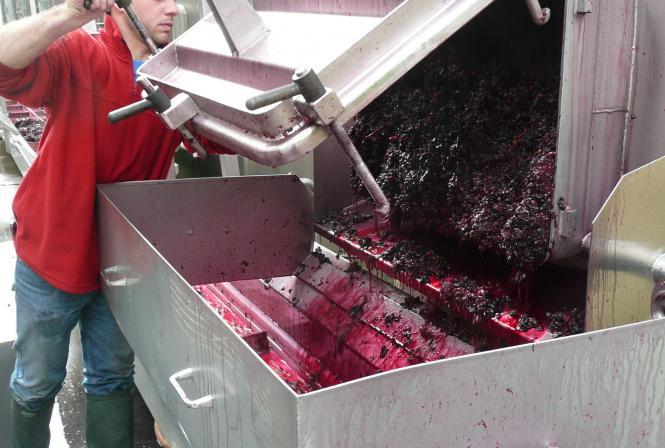 Un millésime qui offre beaucoup de diversité dans les profils de vins rouges