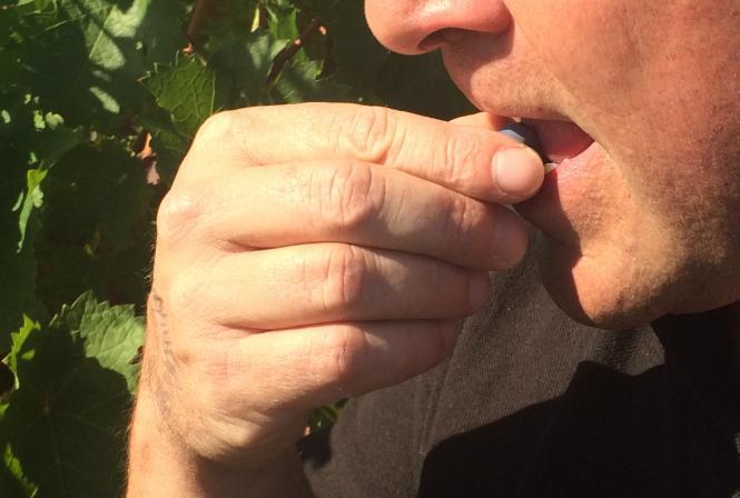 Une autre approche d'évaluation de la maturité du raisin