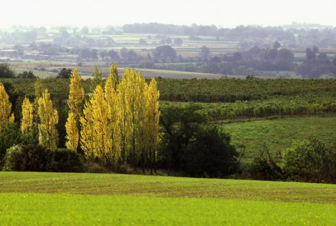 Evolution des contaminations du sol et des eaux par les intrants phytosanitaires