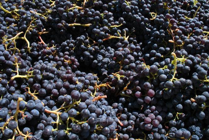 Suivi des résidus de cuivre du raisin au vin