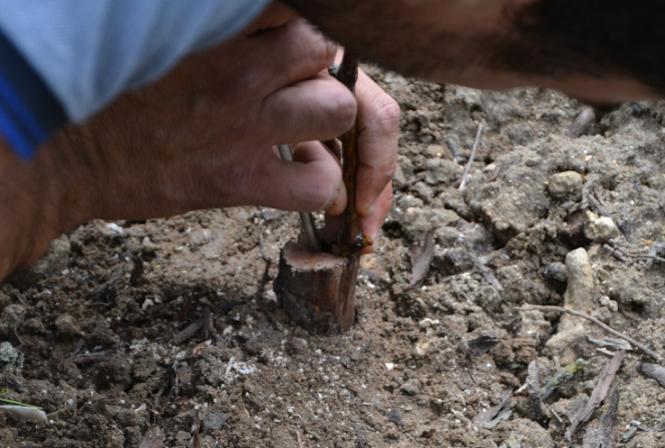 Choisir sa ou ses pratique(s) de lutte contre les maladies du bois