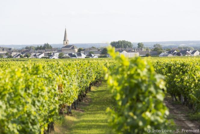 Vignes périurbaines : trouver des solutions pour vivre ensemble