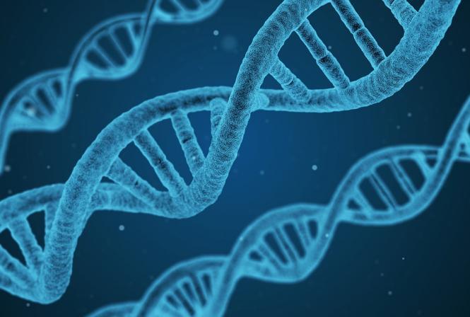 Dépérissement du vignoble, 5 nouveaux projets de recherche