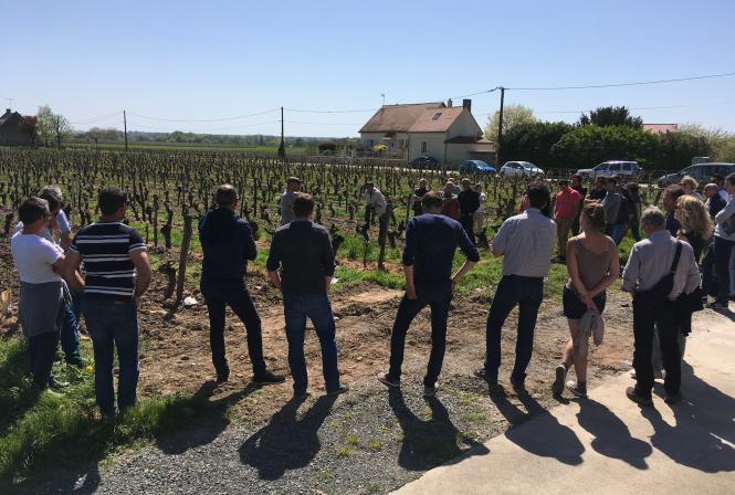 Biodiversité dans les vignes : repartir d'une page blanche ?