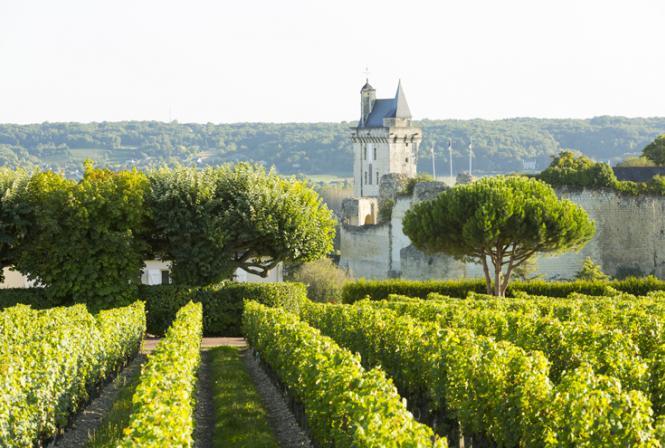 L'Analyse du Cycle de Vie (ACV) adaptée à la production viticole