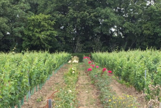 Comment relever la transition écologique au vignoble ?