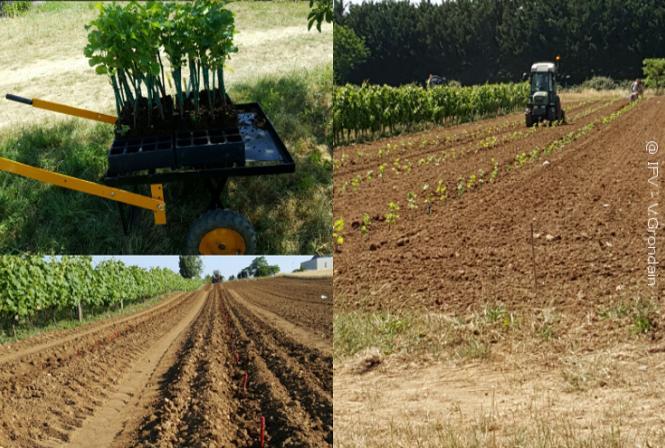 Une activité «matériel végétal» de plus en plus importante en Val de Loire