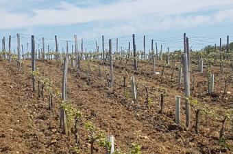 Etat hydrique des sols, un début de millésime préoccupant