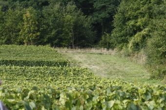 Comment devient-on IGP Val de Loire ?